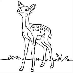 deer drawing easy draw simple drawings line getdrawings