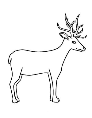 deer coloring drawing drawings step pages draw chevreuil animals cartoon sun 2609 buck getdrawings coloriage printable