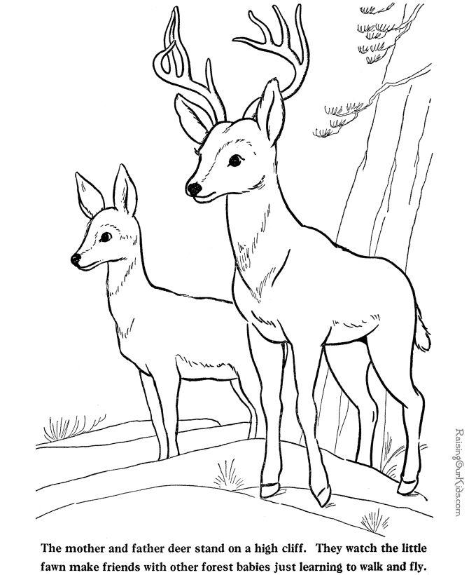 Deer Drinking Water Drawing : drinking, water, drawing, Drawing, Template, Premium, Download