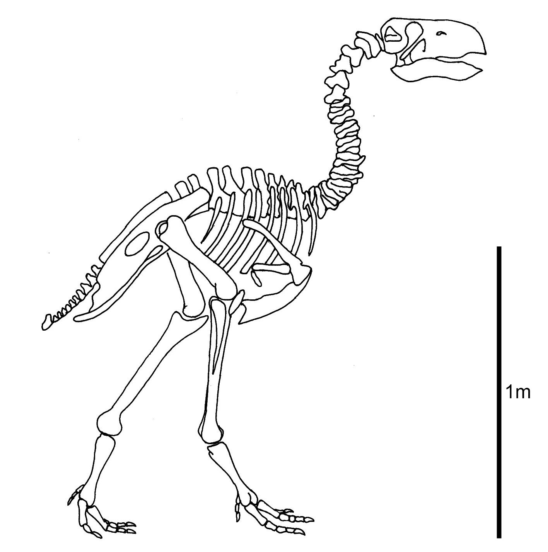 Dinosaur Bone Drawing At Getdrawings