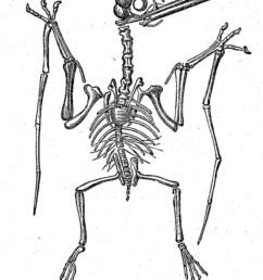 797x1019 dinosaur skeletal reconstruction prehistoric animal bones [ 797 x 1019 Pixel ]