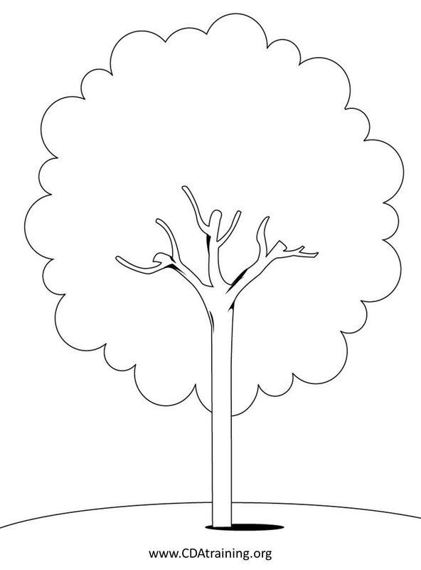 Pennsylvanias State Tree Clipart
