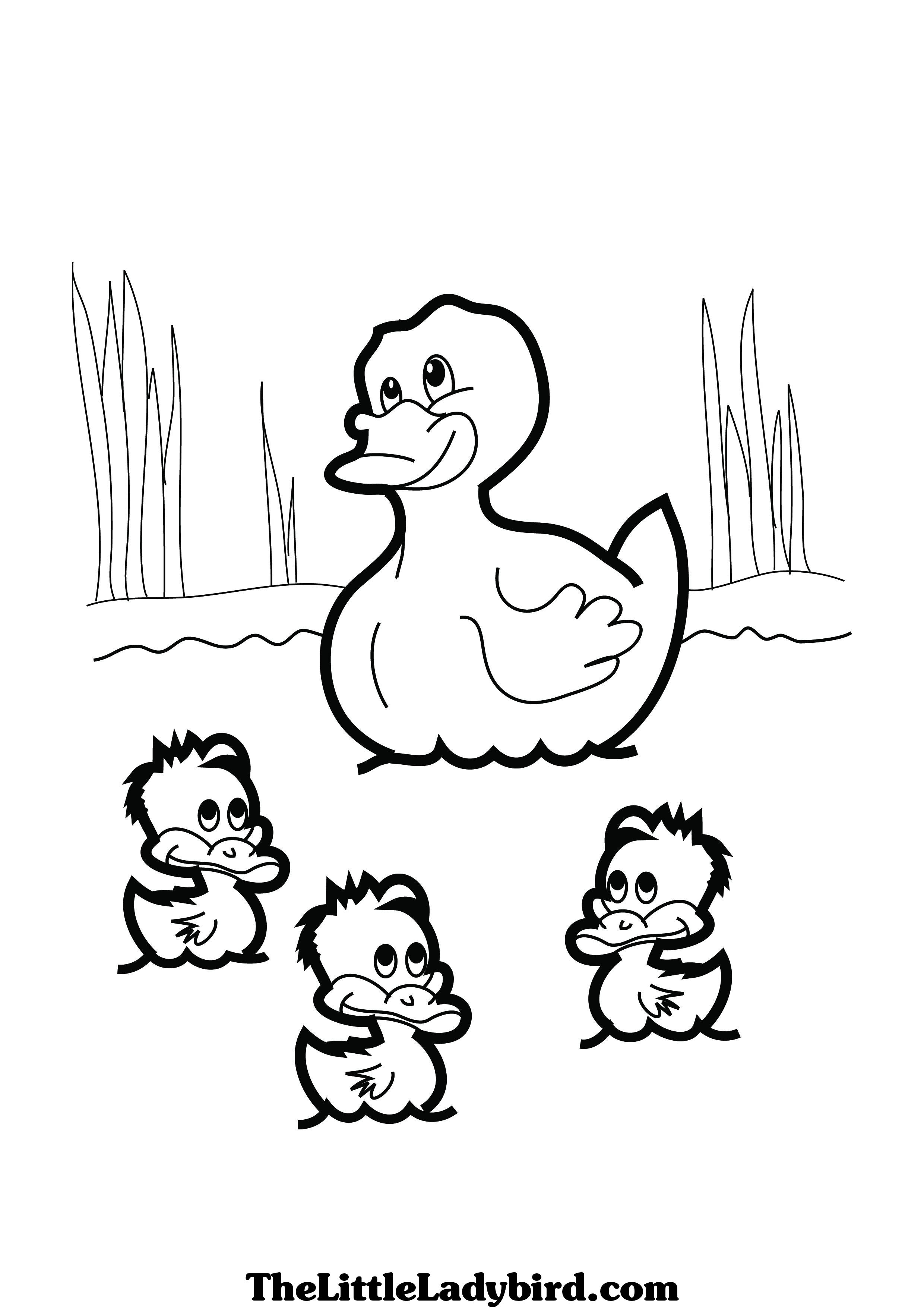 Duck In A Pond Drawing At Getdrawings