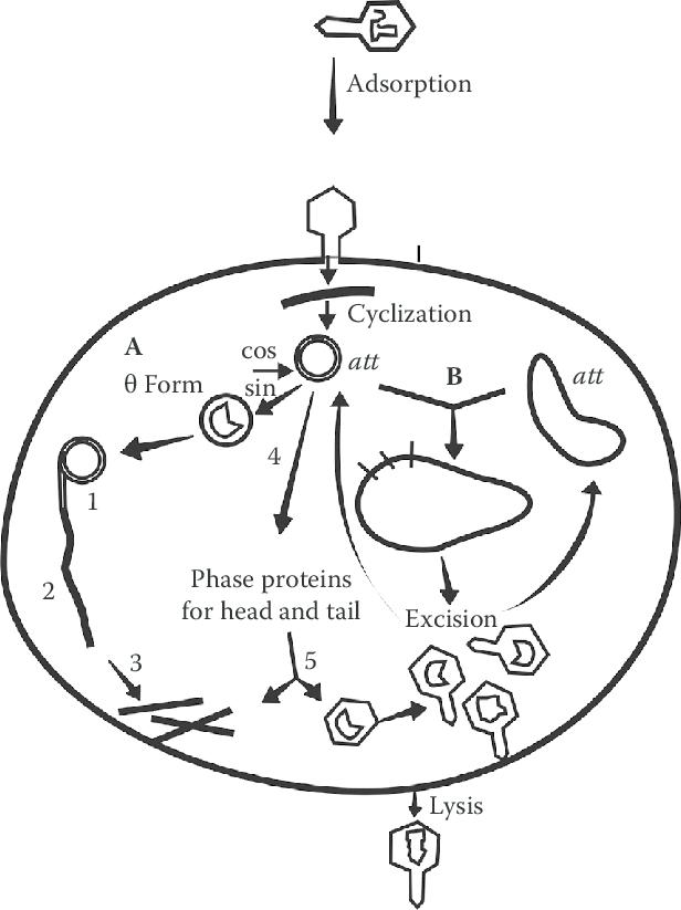 Network Diagram Drawing At Getdrawings Com