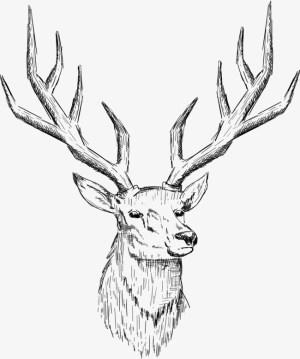 deer head drawing buck elk antlers nordic easy sketch line antler vector getdrawings drawings northern europe paintingvalley vectors