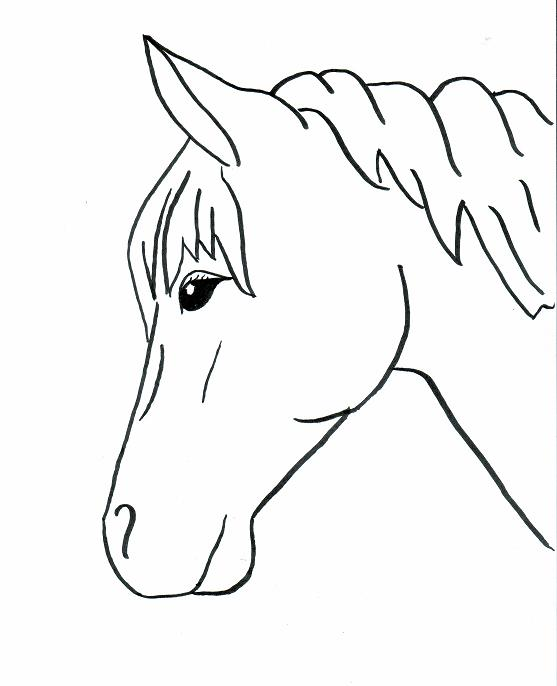 The best free Trace drawing images. Download from 375 free
