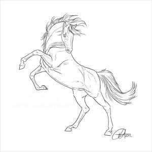 horse drawing drawings horses rearing easy getdrawings