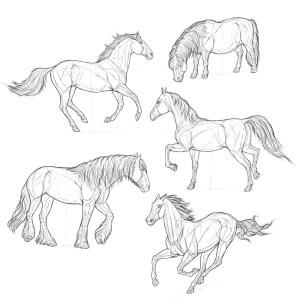 horse easy drawing step draw steps getdrawings