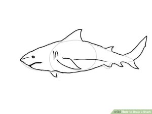 shark draw sketch drawing easy bull step outline ways clipart sketches head