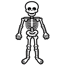 Easy Skeleton Drawing For Kids at PaintingValley.com