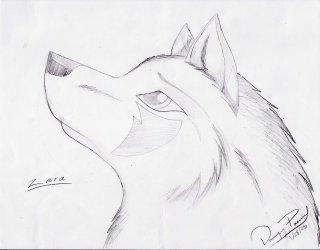easy wolf drawing sketches drawings head pencil spirit step horse face getdrawings animal zara