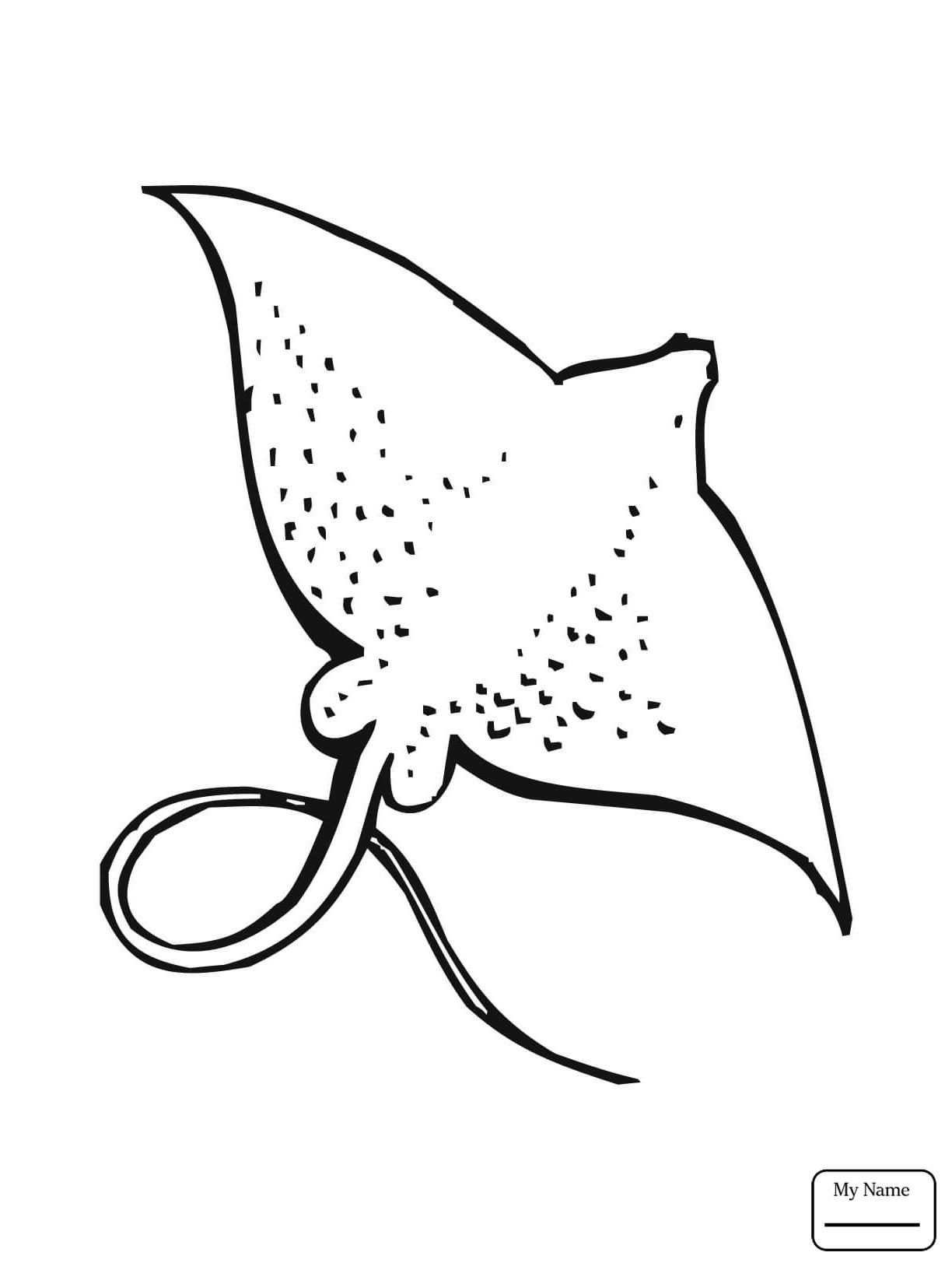 Electric Eel Drawing At Getdrawings