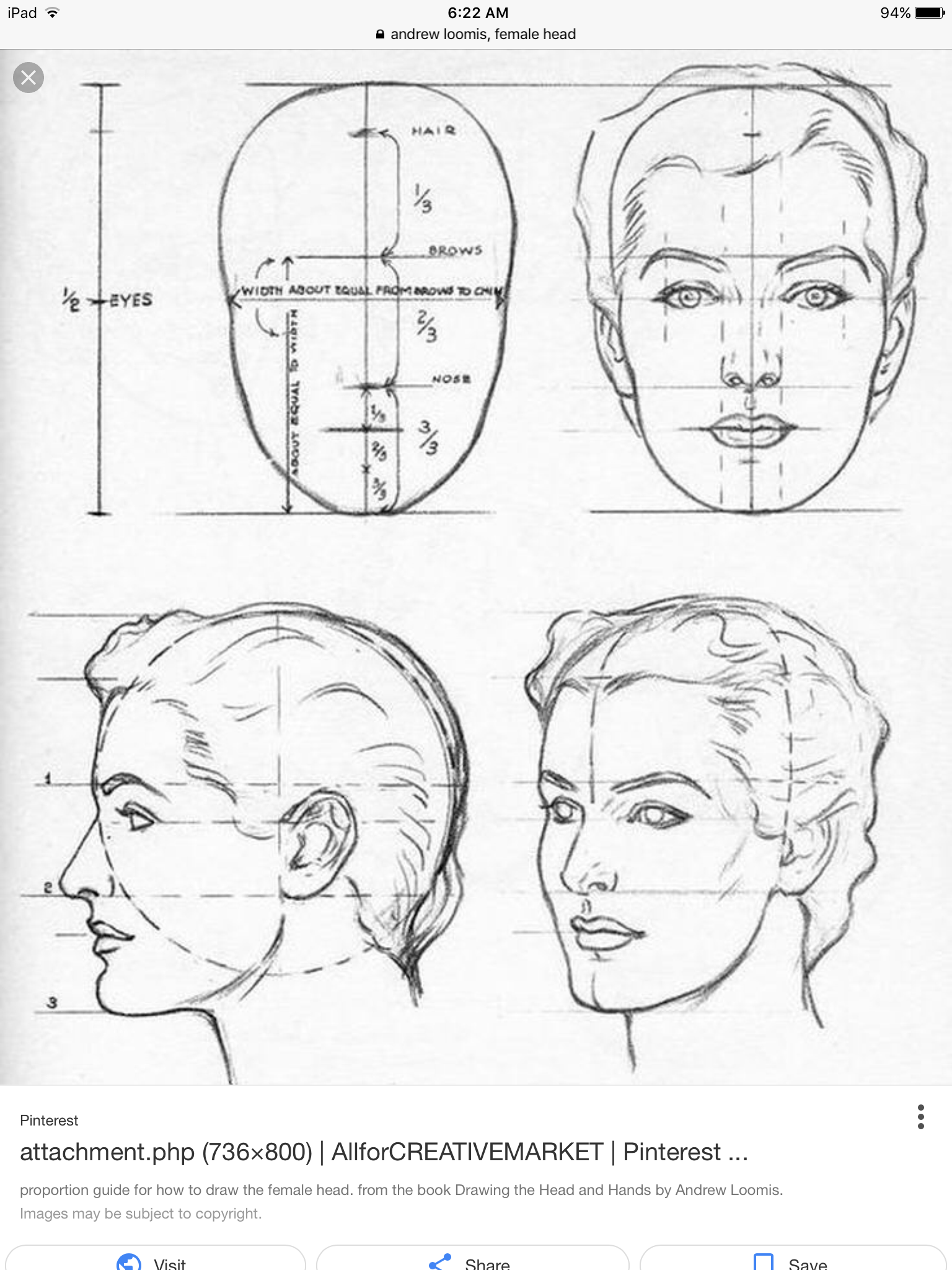 Face Proportion Drawing At Getdrawings