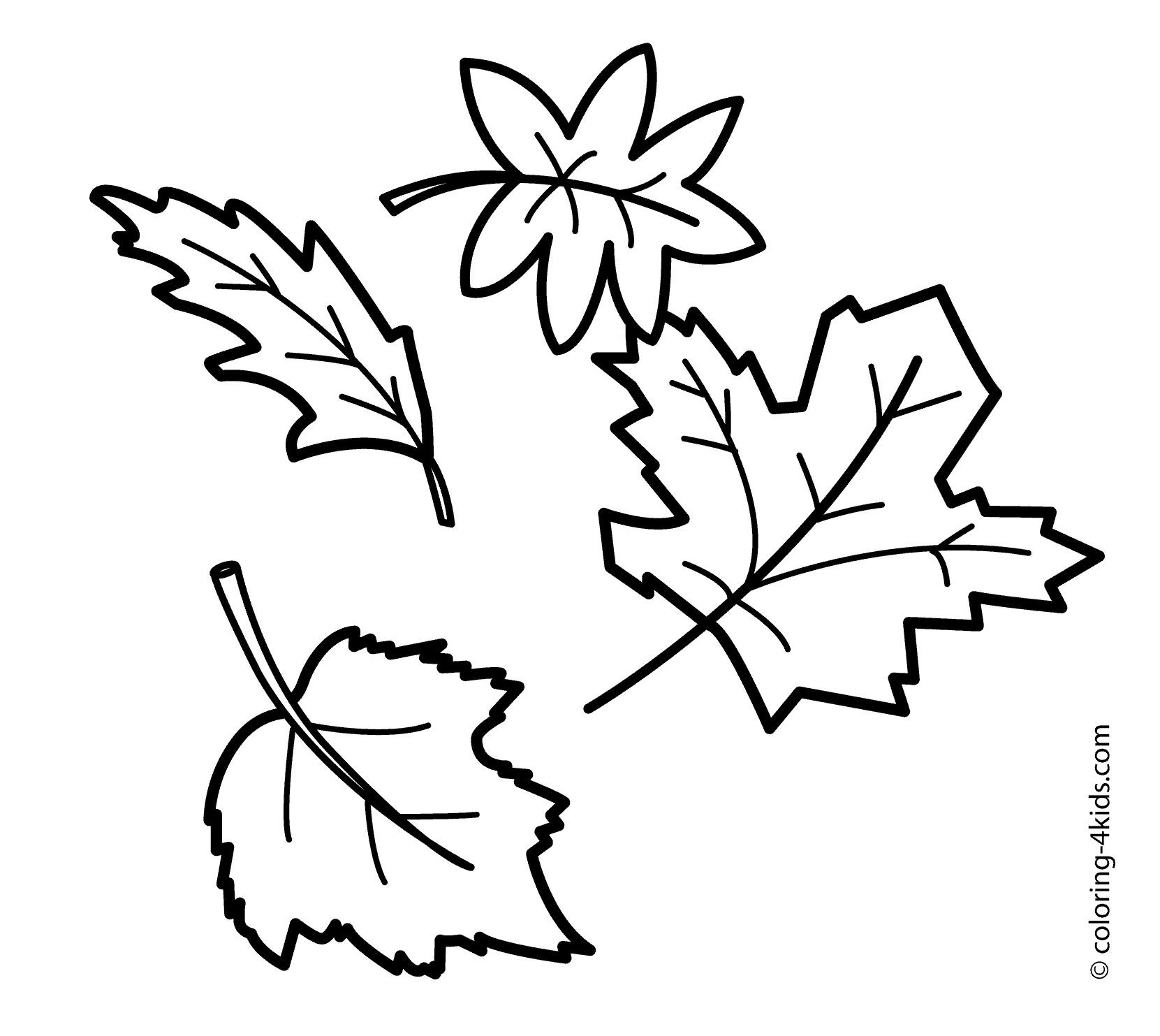 Fall Tree Drawing At Getdrawings