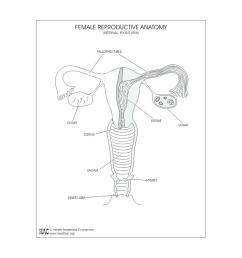 1024x768 worksheet female reproductive system worksheets [ 1024 x 768 Pixel ]