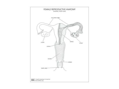 small resolution of 1024x768 worksheet female reproductive system worksheets