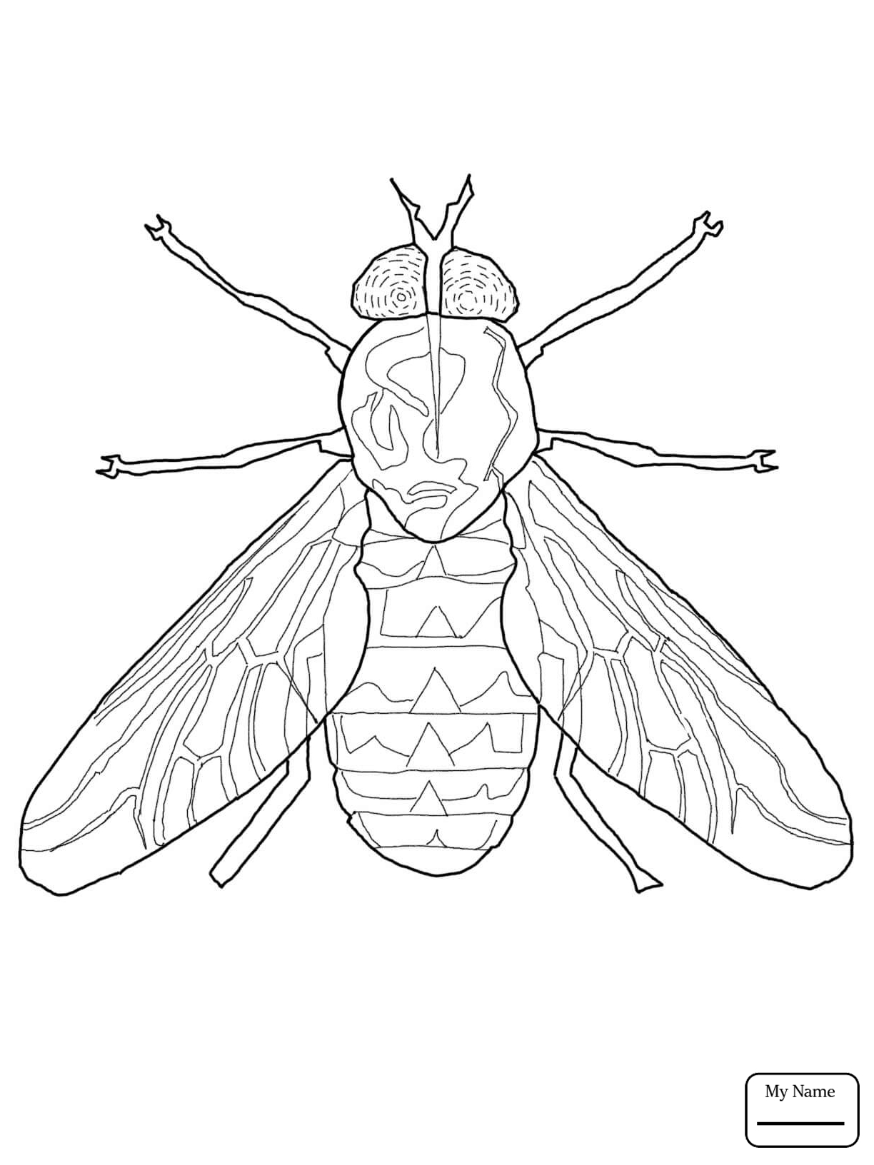 Firefly Insect Drawing At Getdrawings