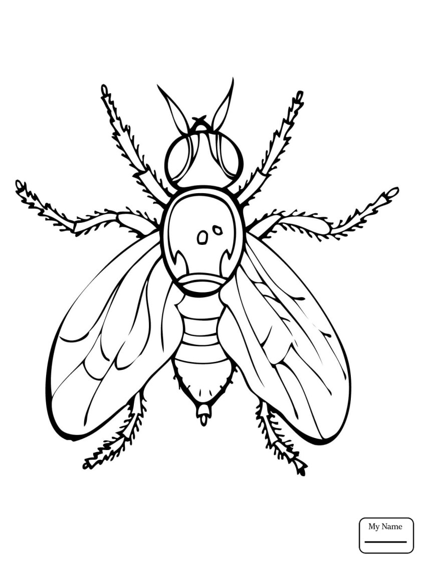 firefly insect drawing at getdrawings  free download