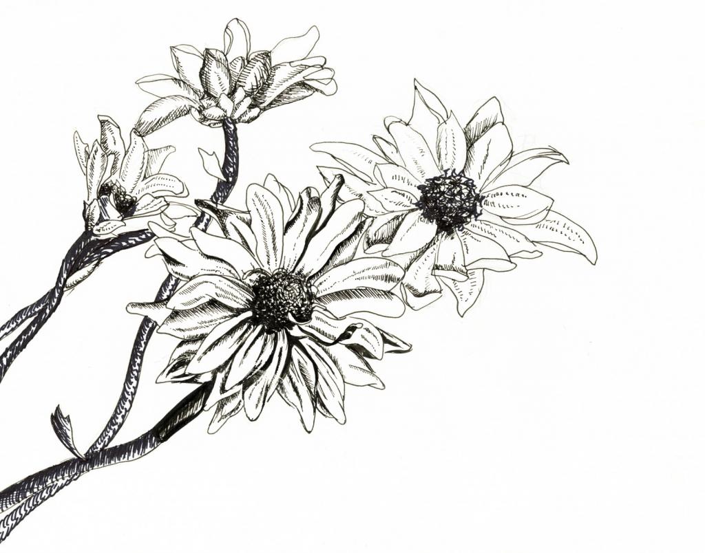 Flower Ink Drawing At Getdrawings