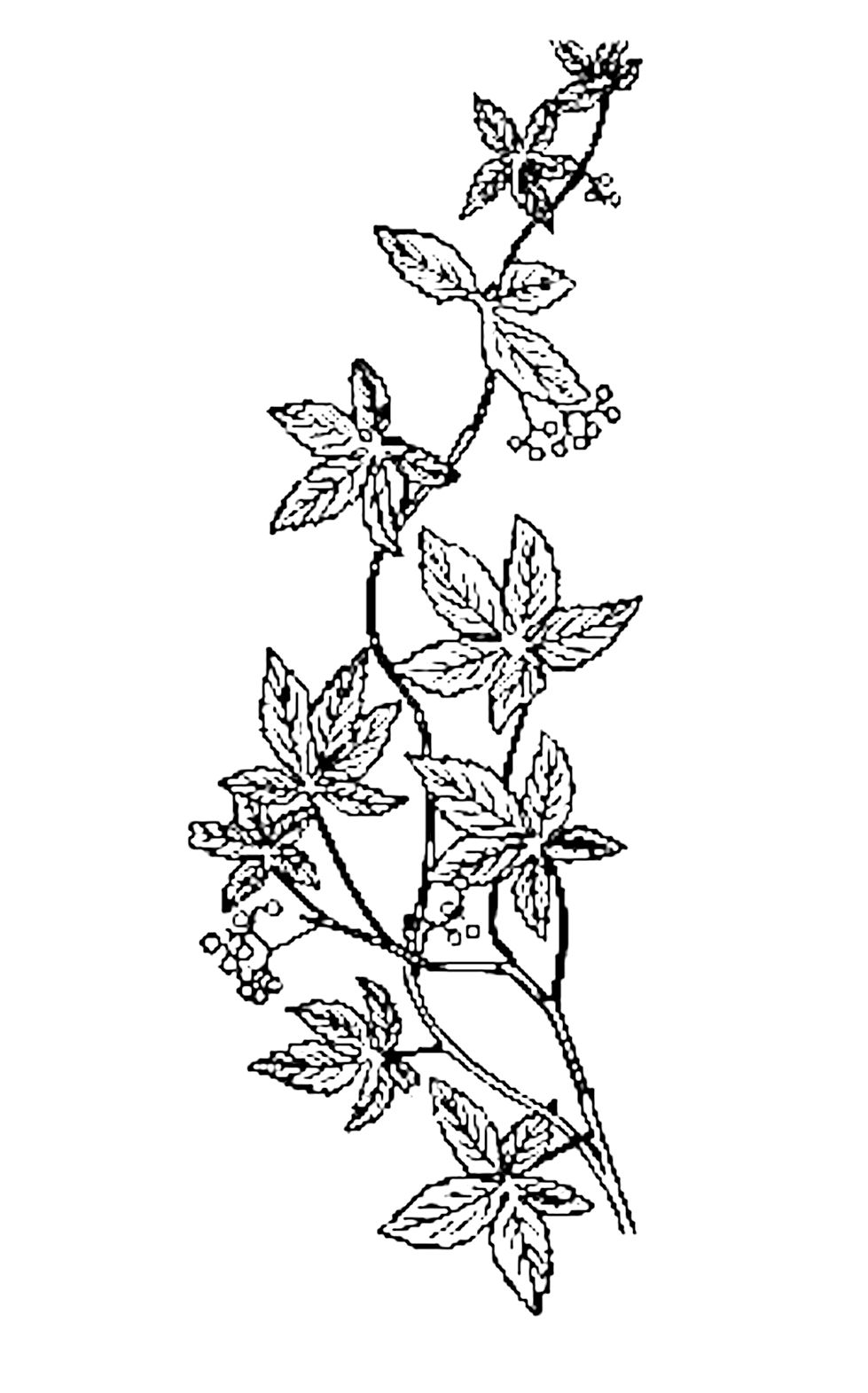 Easy Drawings Of Flowers And Vines Free Printable Hand Drawn