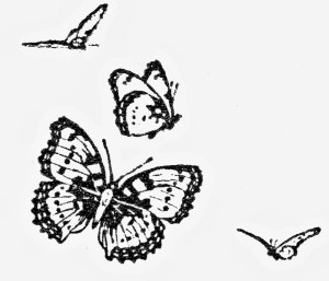 butterfly fly flying drawing tuesday digital getdrawings