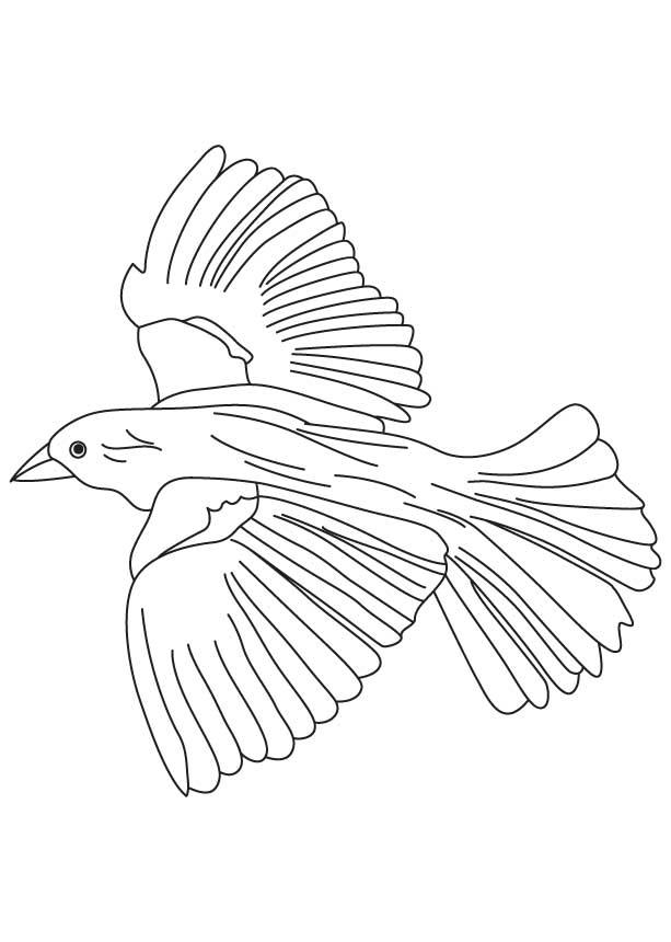 Dove Bird Drawing At Getdrawings Com