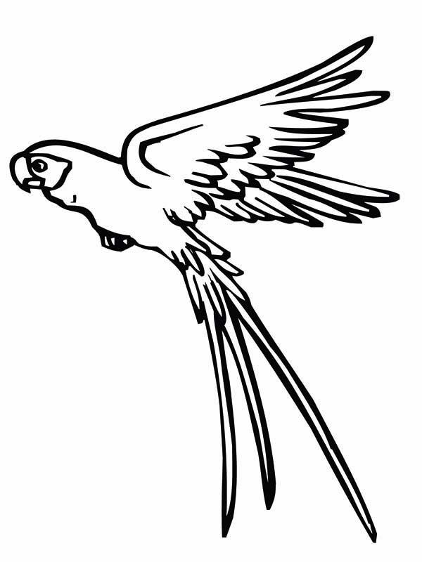 Flying Fish Drawing At Getdrawings Com