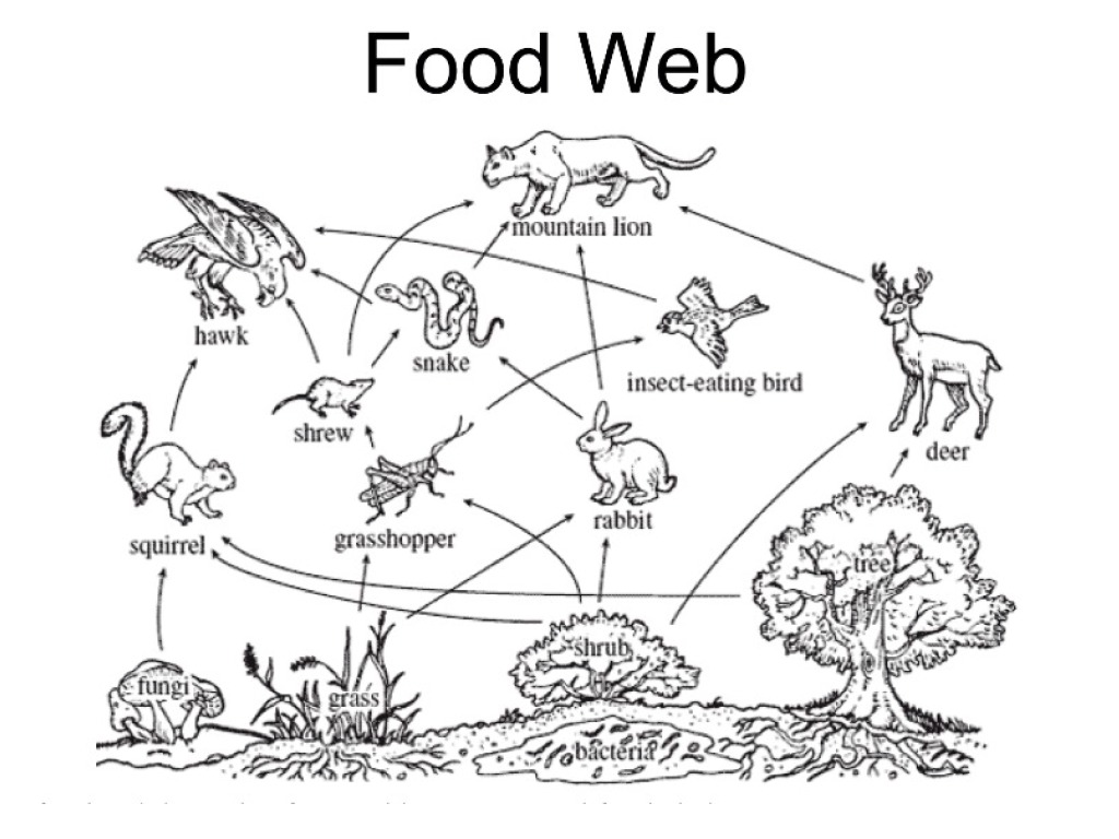 Food Web Drawing At Getdrawings