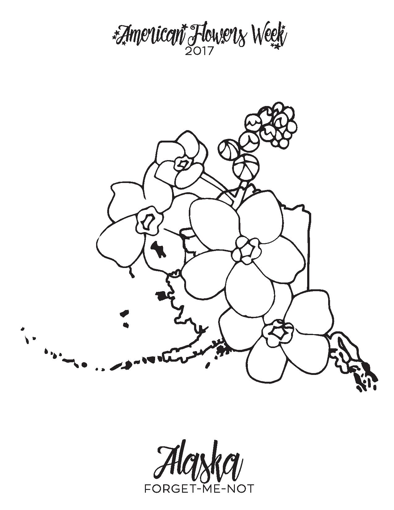Forget Me Not Flower Drawing At Getdrawings