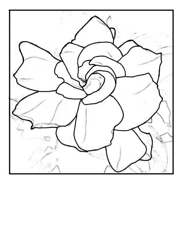 How To Draw A Gardenia : gardenia, Gardenia, Drawing, GetDrawings, Download