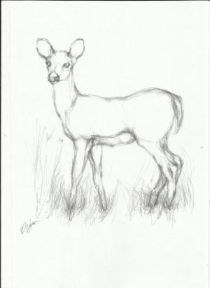 giraffe easy drawing drawings getdrawings