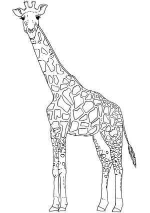 giraffe drawing outline clipart line coloring pages easy draw girrafe giraffes cartoon cliparts blackpool sketch pencil clip getdrawings library primary
