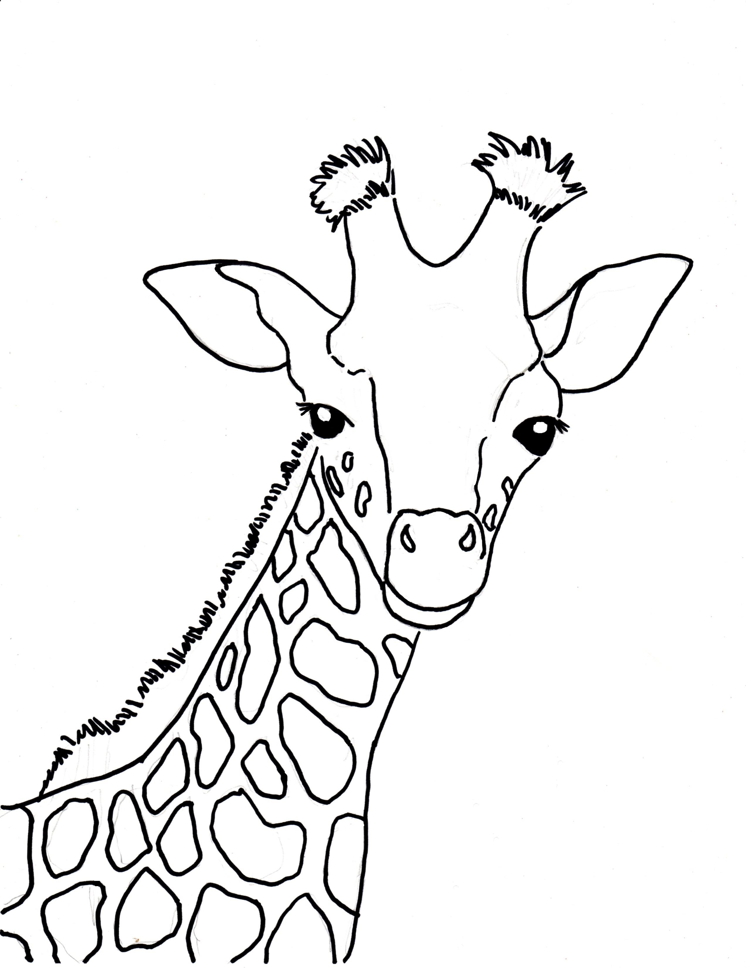 Giraffe Drawing Outline At Getdrawings