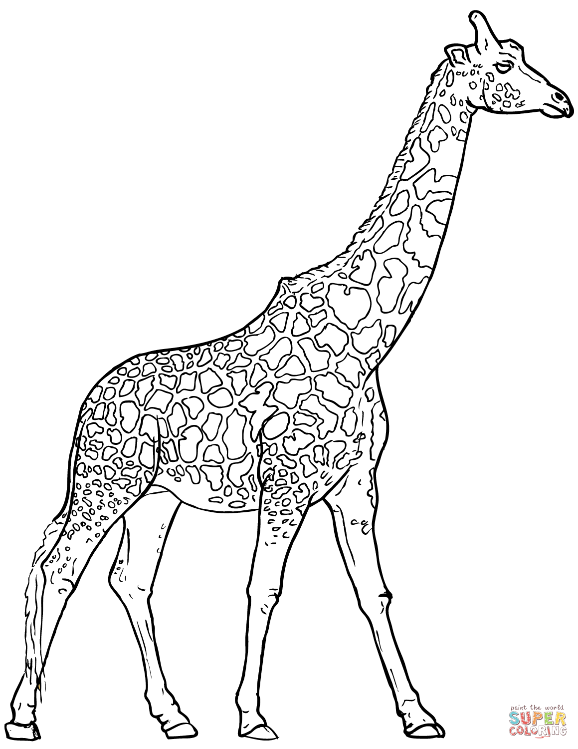 Giraffe Pictures Drawing At Getdrawings