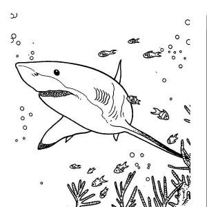 great white shark coloring pages # 27