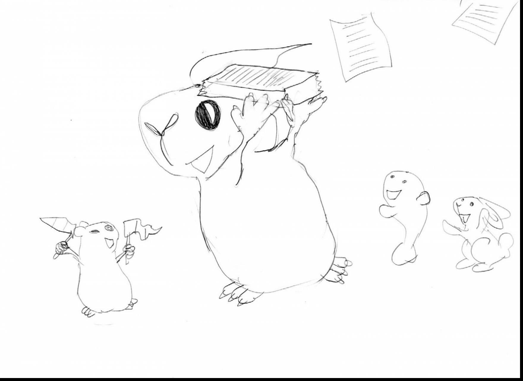 Guinea Pig Drawing At Getdrawings
