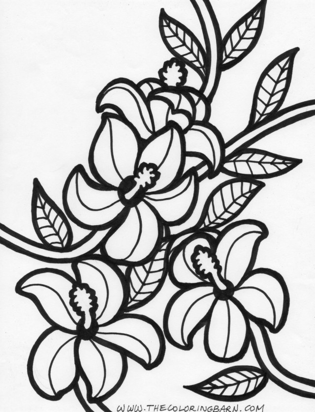Hawaiian Flowers Drawing At Getdrawings Com