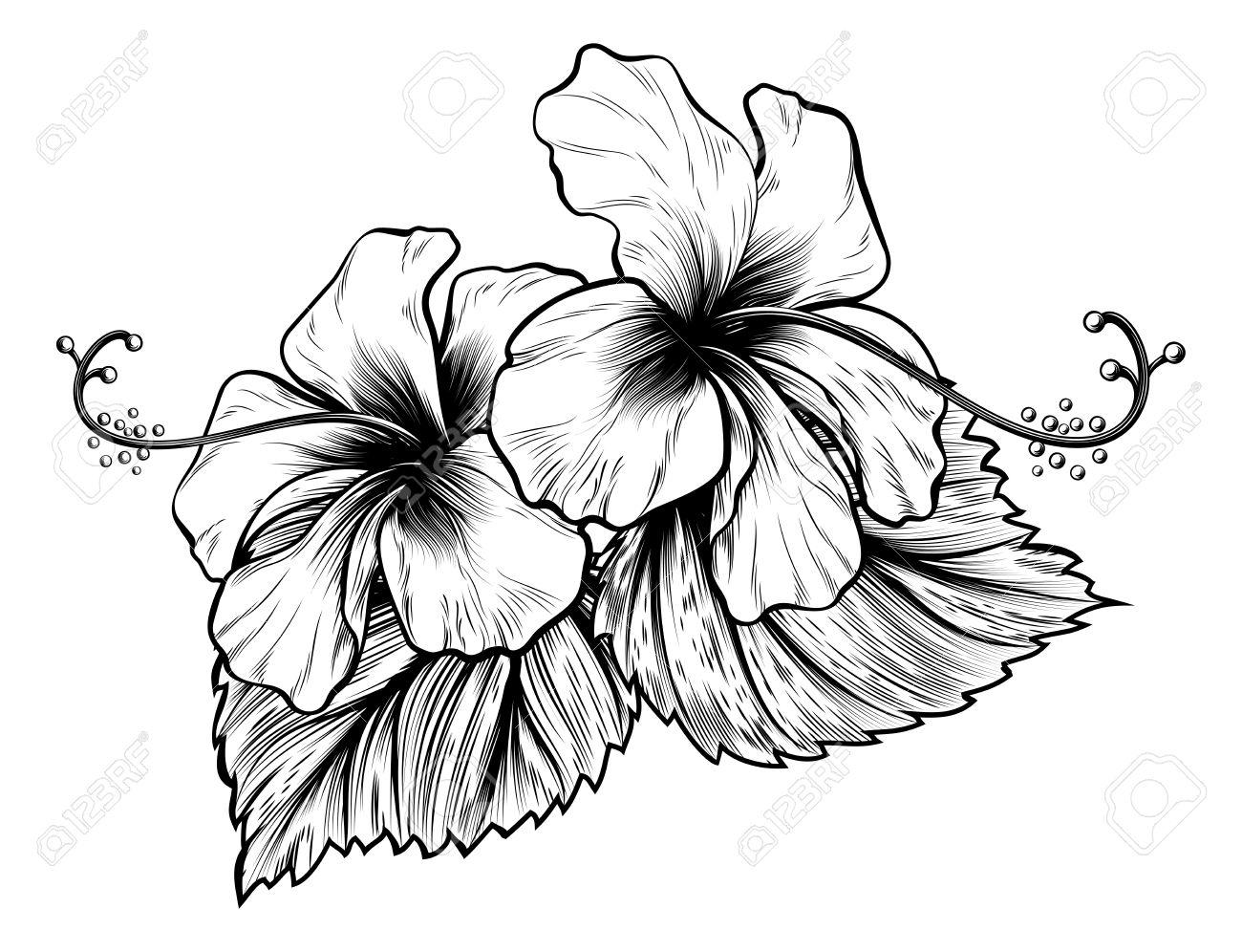 Hawaiian Hibiscus Drawing At Getdrawings