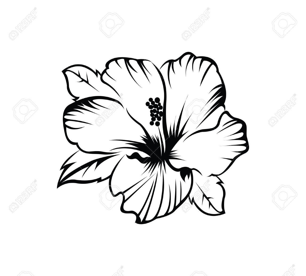 Hawaiian Islands Drawing At Getdrawings
