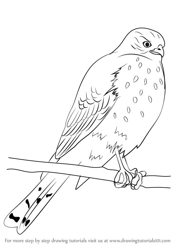 Eagle Bird Claws Stock Vector