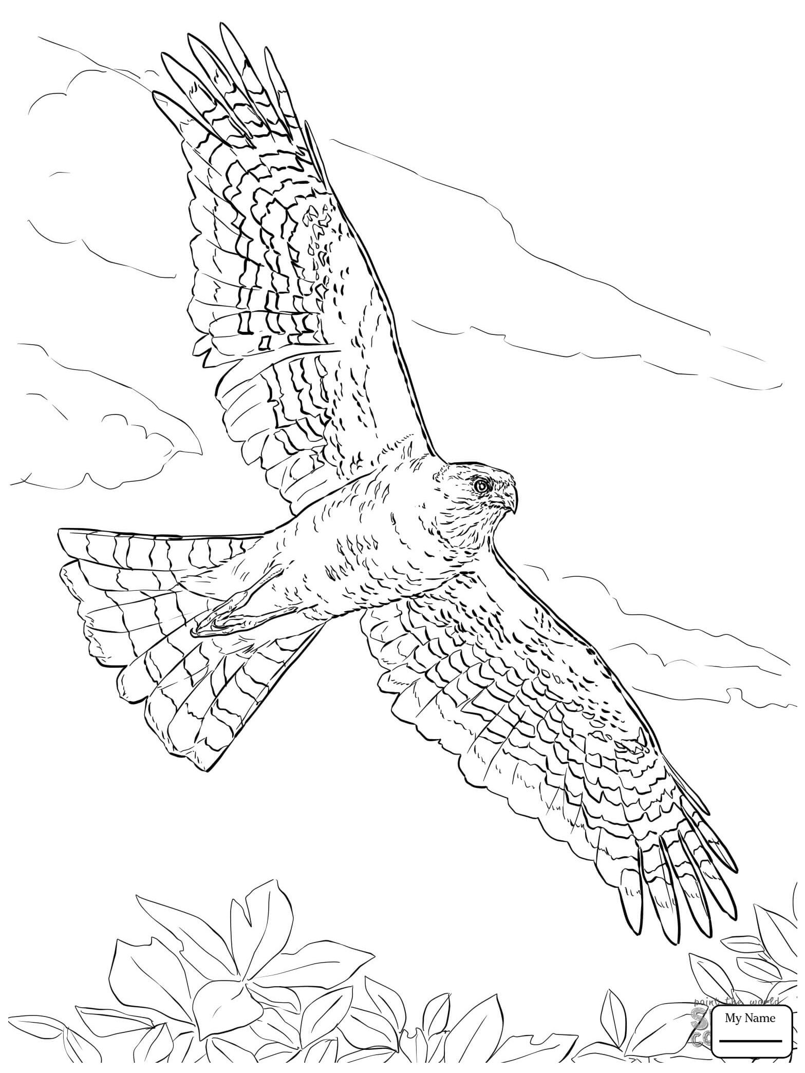 Hawks Drawing At Getdrawings