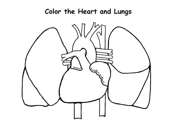 Heart And Lungs Drawing At Getdrawings Com