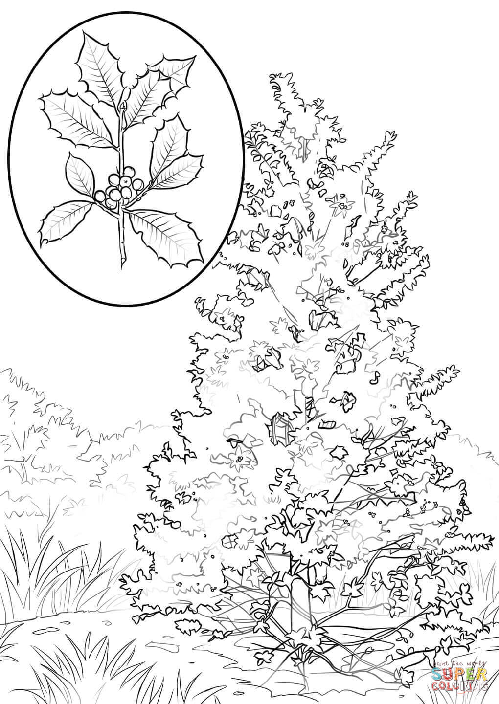 Holly Leaf Drawing at GetDrawings Free download