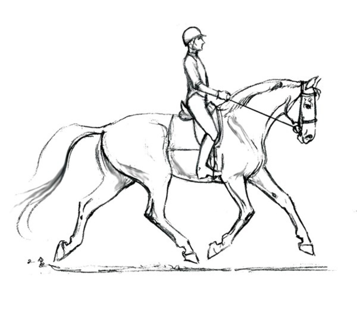 Horse Bridle Drawing At Getdrawings