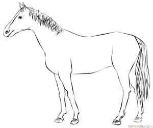 horse draw standing realistic drawing easy step cartoon horses drawings tutorials steps getdrawings beginners