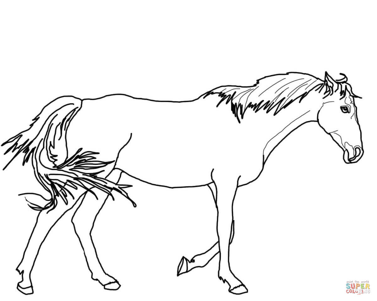 Horse Drawing Outlines At Getdrawings