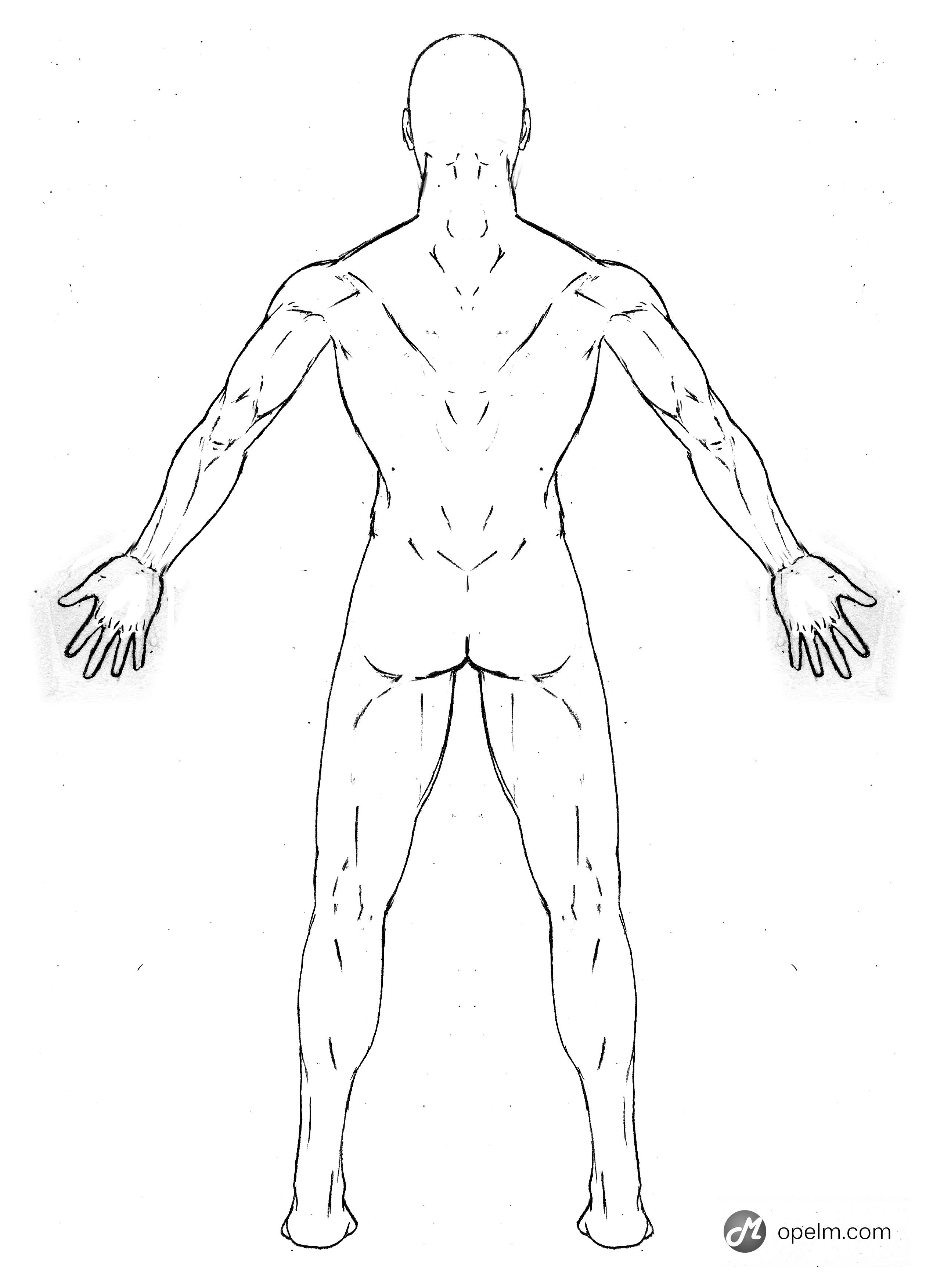 Human Back Drawing At Getdrawings