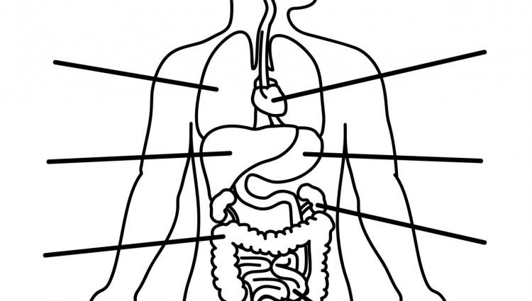 Inner Organ