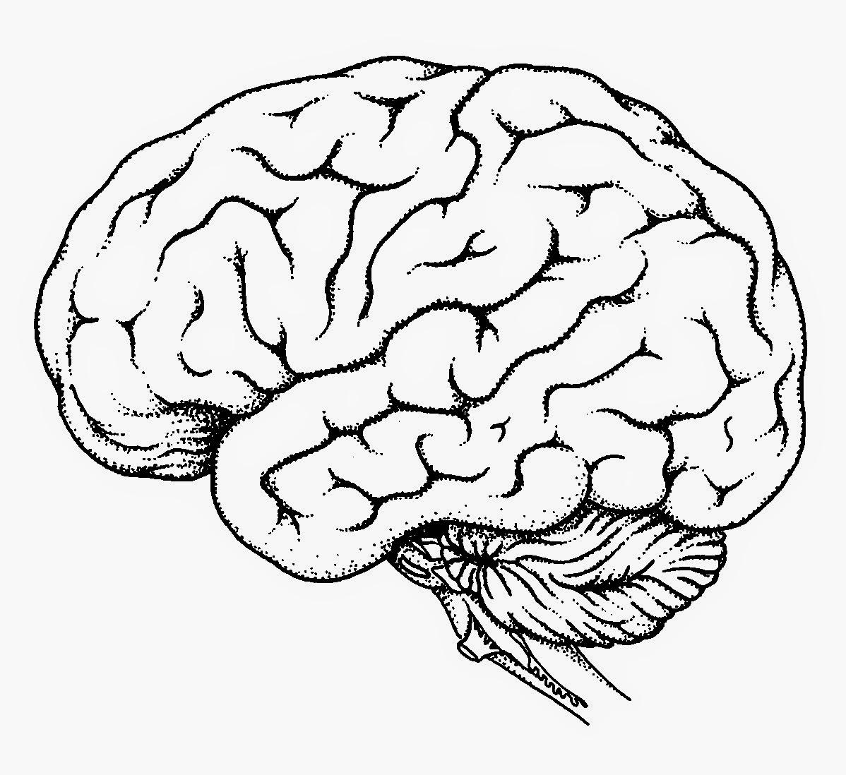 easy brain diagram mazda 6 wiring 2006 human drawing at getdrawings free for personal