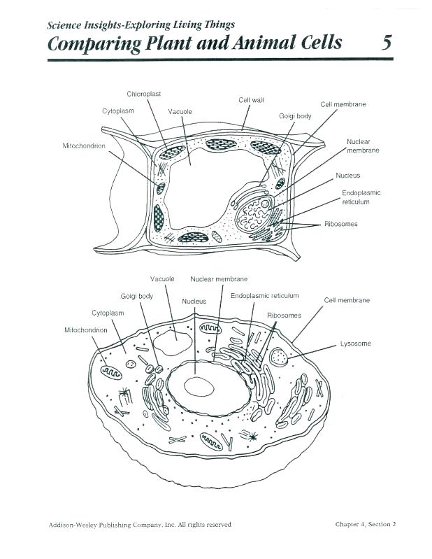 human cell wall diagram labeled wiring for tow bar drawing at getdrawings com free personal use 618x799 coloring page animal